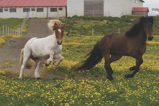 Pferd Erpur