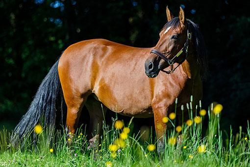Pferd Mati